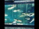 Ядовитая рыба 🐟 Фугу