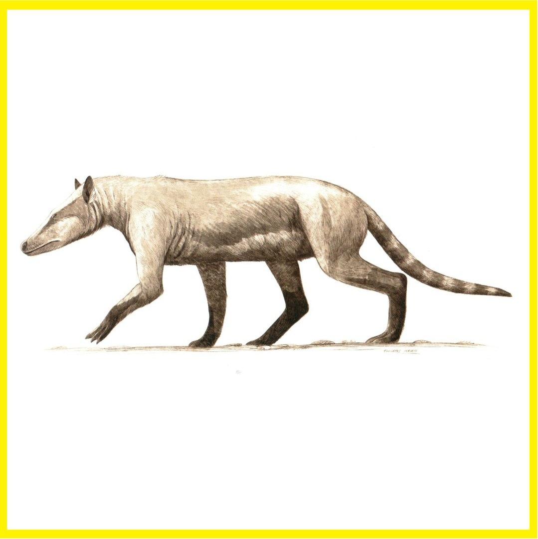 evolution of animals - HD1079×1080