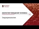 Биология поведения человека Лекция 12 Эндокринология Роберт Сапольски 2010 Стэнфорд