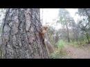 Прогулка по осеннему лесу. Дендрологический парк города Новосибирска.