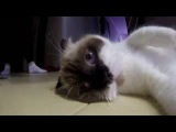 Go Pro: THE SWEETEST CAT IN THE WORLD