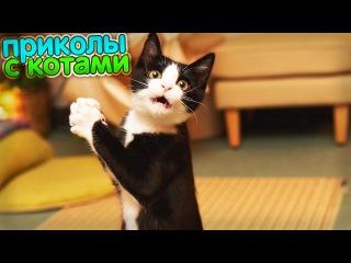 Приколы с Котами - Смешные коты и кошки