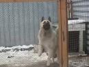 DogStation piratestation dog dance Troglodyte danceallnight drugs drugsdog