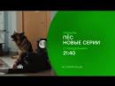"""#сериалНТВ: """"ПЕС - 2. НОВЫЕ СЕРИИ"""" - с 2 октября в 21.40 на НТВ"""