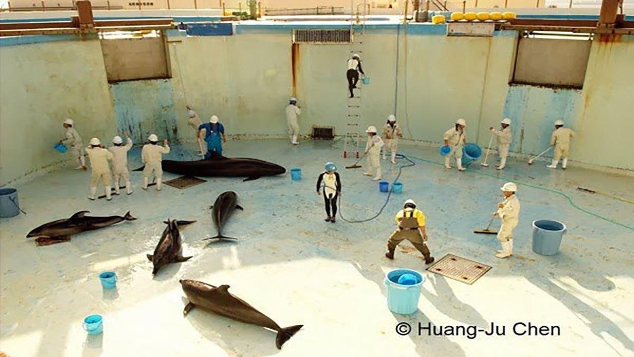 Дельфинарии и океанариумы– жестокий бизнес
