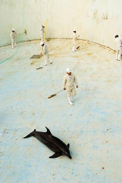 Дельфинарии и океанариумы