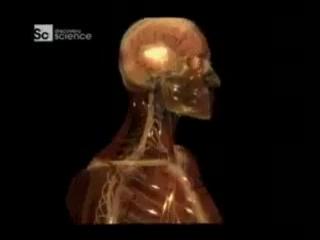 Тело человека. Грани возможного - Органы чувств.