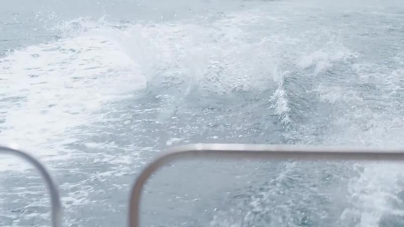 Bottlenose Dolphins Marlborough Sounds