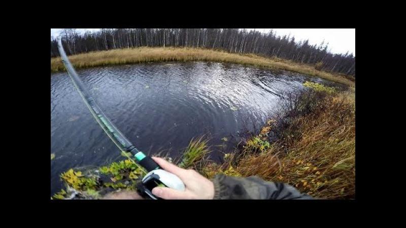 Syyshauen kalastusta syrjäisellä joella | Autumn Pike fishing on river