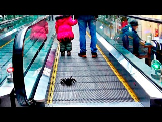 Bad Baby Гигантский Паук Напал в Супермаркете Giant Spiders Attack Girl in Supermarket Daddy Freaks