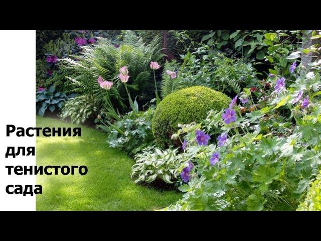 Растения для тенистого сада. Что посадить в тени деревьев