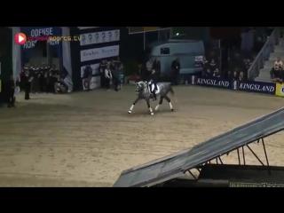 Завидная выдержка у лошади!