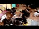 Вторая партия хвостиков переехали в приют Юджин, Маша, Лола, Шелби, Вильямс. 09.06.17