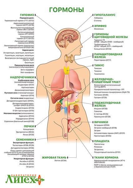 Мужское женское ест мужские гормоны