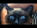 Лучшая игрушка для кота или котенка VLOG Дарим лапу, кот в восторге, Тася смеется, ca...