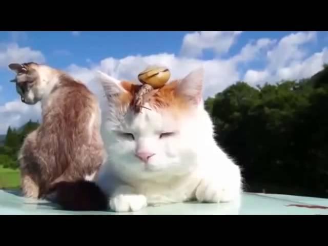 Кот, постигший дзен, и его верный друг-улитка