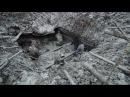 Раскопки немецкого Блиндажа Вторая Мировая HD Excavations of German dugout