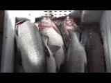 Классная разделка рыбы на Колыме.
