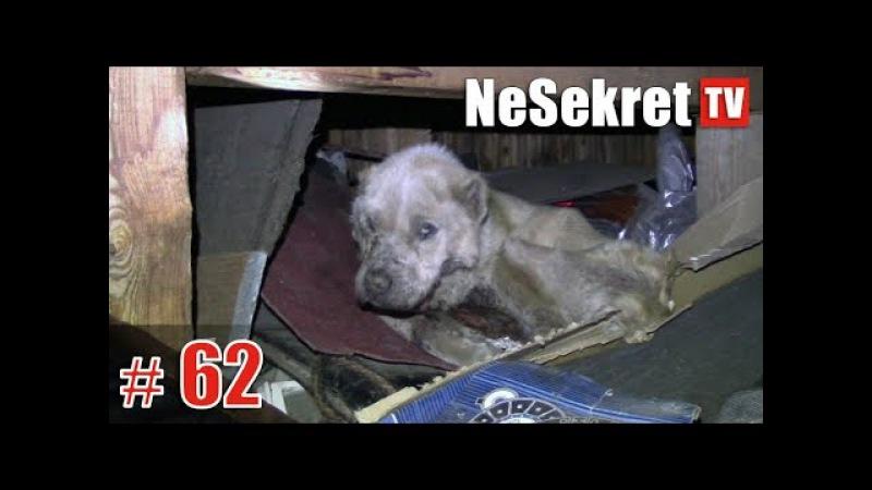 Спасение 62. Собака погибала под крыльцом. Город Улан-Удэ.