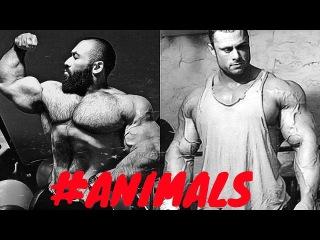 BODYBUILDING MOTIVATION - ANIMAL PLANET 2015 NEW