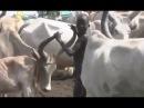 Африканские обычаи племени Динко