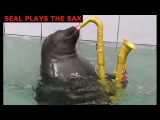seal plays sax