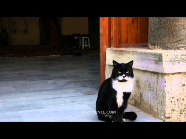 Islam and cats - Video Learning - WizScience.com