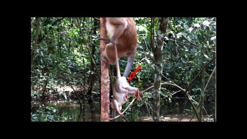 Wow ! Kidnapper Bad doing With Baby Monkeys Charles ,Amara