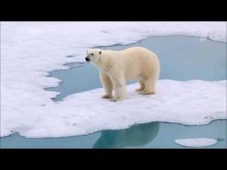 «Большая уборка» вАрктике: результаты очистки Земли Франца-Иосифа оценили президент ипремьер