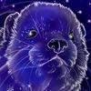 "Питомник хорьков ""Galaxy Ferrets"""