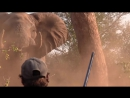 Elephant Charge in the Kruger Park