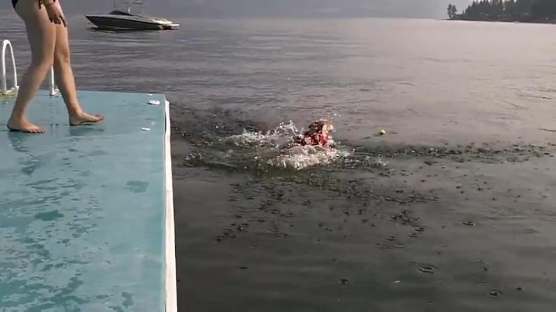 Я плаваю примерно как этот корги🙈