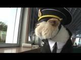Приколы с Котами ДО СЛЁЗ Очень Смешные Кошки 2017