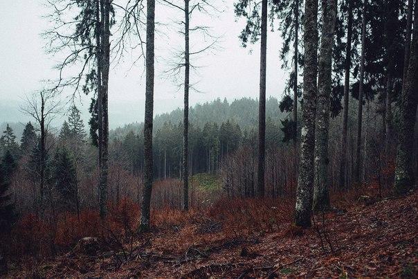#Пост_про_Сибирь  Осенью в сибирской тайге невероятно красиво.