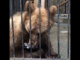 Злобный медвежонок:))