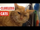 Clueless Cats Funny Pet Video Compilation 2017