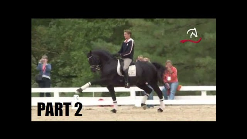 Edward Gal Totilas warm up WEG Kentucky 2010 - Trot work - Part 2