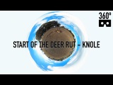 Start of the deer rut - Knole Park in VR 360 Video