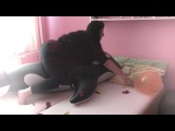 popping balloons nails and stomp - Balloon Fetis HD