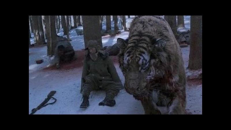Самый популярный фильм за 2016 год ✭ТИГР✭ ДРАМА, ПРИКЛЮЧЕНИЯ