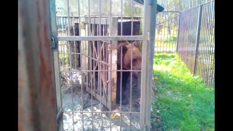 Медведь у Комсомольского