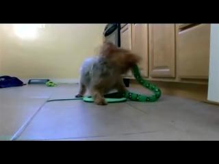 «Введение в собаковедение» (19 серия) (Научно-популярный, животные, 2010)