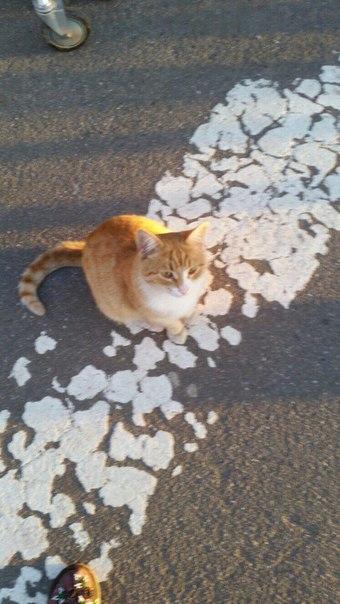 Котик,молодой,чистенький,упитанный,безумно ласковый целовальник. Видно