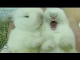 Animals Yawning