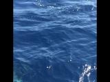 Дельфины!!! Аренда яхт www.free-sail.com