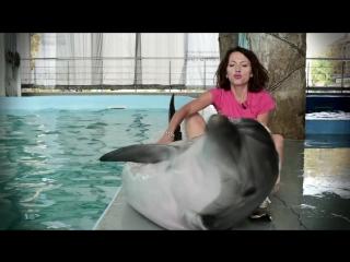Дельфин афалина - секс , драгс , рок-н-ролл ( Всё как у зверей ) ...
