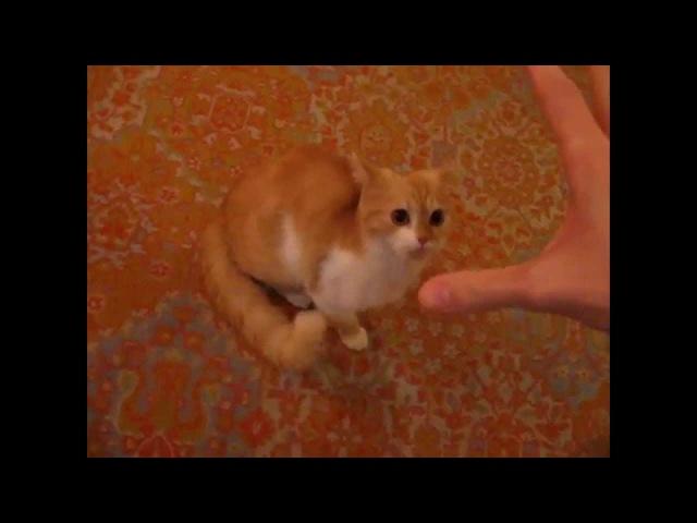 Кот, сука, резкий! Fast cat