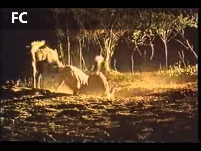 A evolução dos Felinos e Caninos através da história 4/4. Caninos 2
