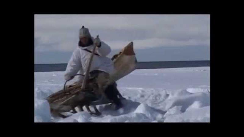 Охотники студеных берегов