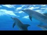 Глубины океана под музыку Adham Shaikh